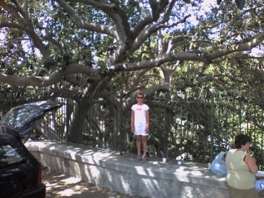 Egy fa Siracusában