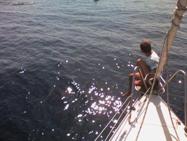 Másodszor is jöttek a delfinek