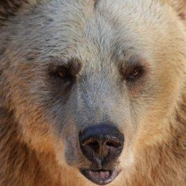 Medvét akartunk látni? – Kattints a teljes szövegért